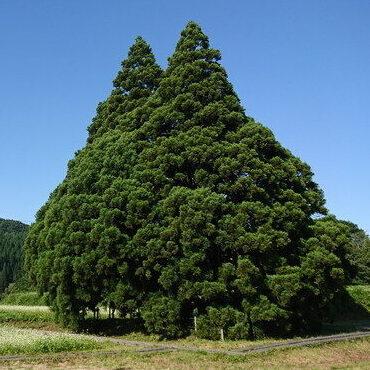山形のトトロの木を見に行こう!|駐車場や周辺情報もレポ