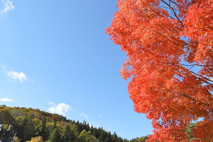 山形県民の森-紅葉もみじまつり-もみじと青空
