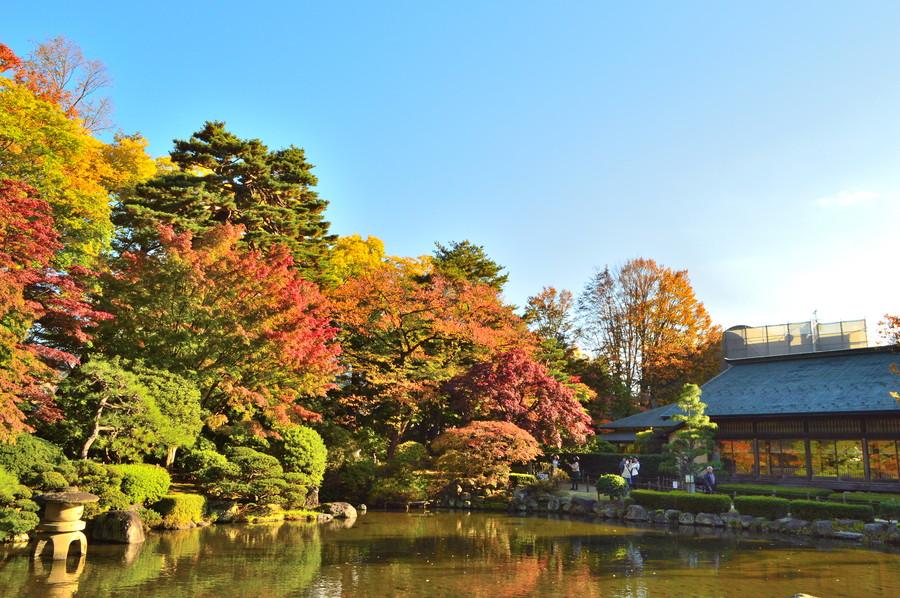 もみじ公園-紅葉の様子1