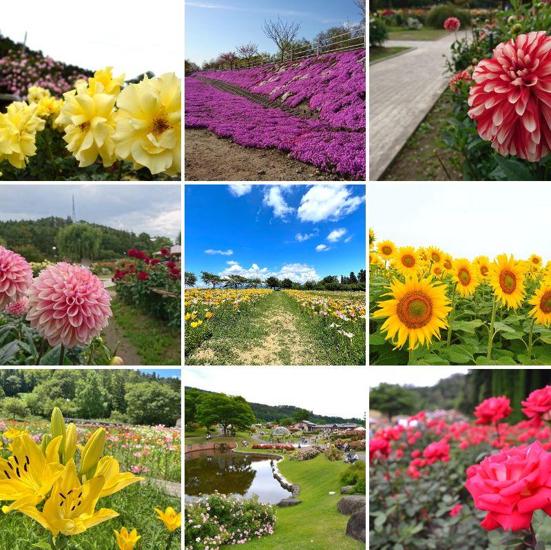 【山形のお花まとめ】花まつりや公園などおすすめ花畑 7選